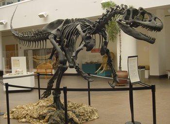 Allosaurus_SDNHM.jpg