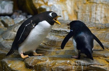two-angry-penguins.jpg