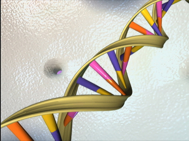 DNA_Double_Helix_by_NHGRI-NIH-PD.jpg